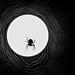 spidermoon by hwicker