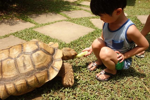 Jerry feeding the tortoises.