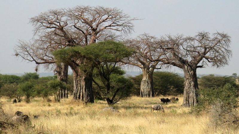 Tarangire National Park, TANZANIA, July 2013