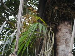 Yasuni Orchid