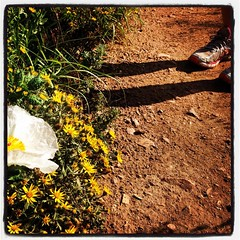 #scenesfromthetrail #altrarunning @altrarunning #jcoslove #wildflowers #ultratraining #trailtime #trailporn #outsideisfree #ilovetrailrunning #jeffcoopenspace #runuphill #runwithstrava #runwhereyouroam #stravarun #swiftwicksocks @swiftwicksocks #trailrunn