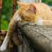 Gato by [[^Raúl^]]