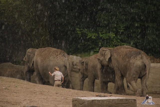 Tierpark Hagenbeck 25.07.2015 050