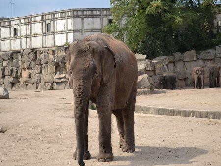 Tierpark 3 5 Recomandari turistice in Berlin