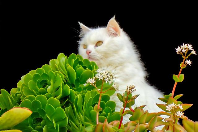 Lindo gatito (Cute kitty) - In Explore 12-8-15