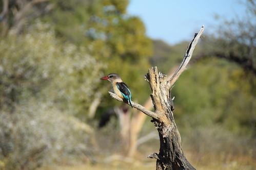 Bushveld, South Africa