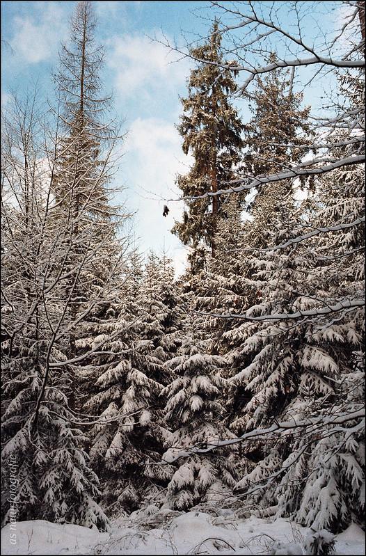 Winterspaziergang am Katzenbuckel (4)
