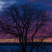 Same old tree with a new background ... :-) by frankmh