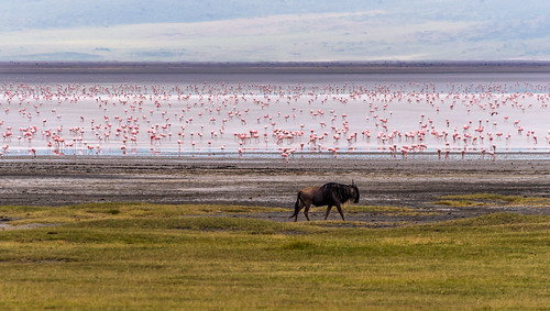 Walk Amongst the Flamingoes by Geoff Livingston
