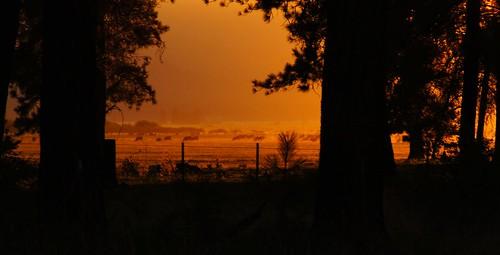 trees sunset usa silhouette oregon fence golden cow cattle cows fv10 framing lowkey ponderosa goldenhour lightfantastic hff fencefridays