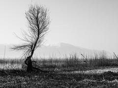 2015 Voyage aux  Balcans et dans le Caucase,noir/blanc