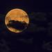 Blue Moon, July 2015 (20150731-212454-PJG) by DrgnMastr