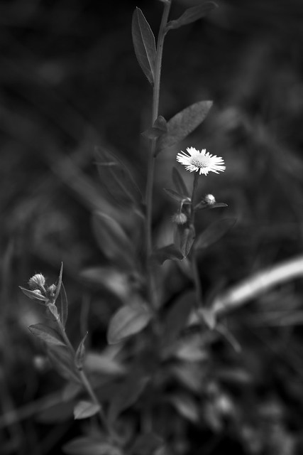 D7200 monochrome photography #