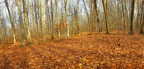 holliday park preserve woods westland michigan beech trees