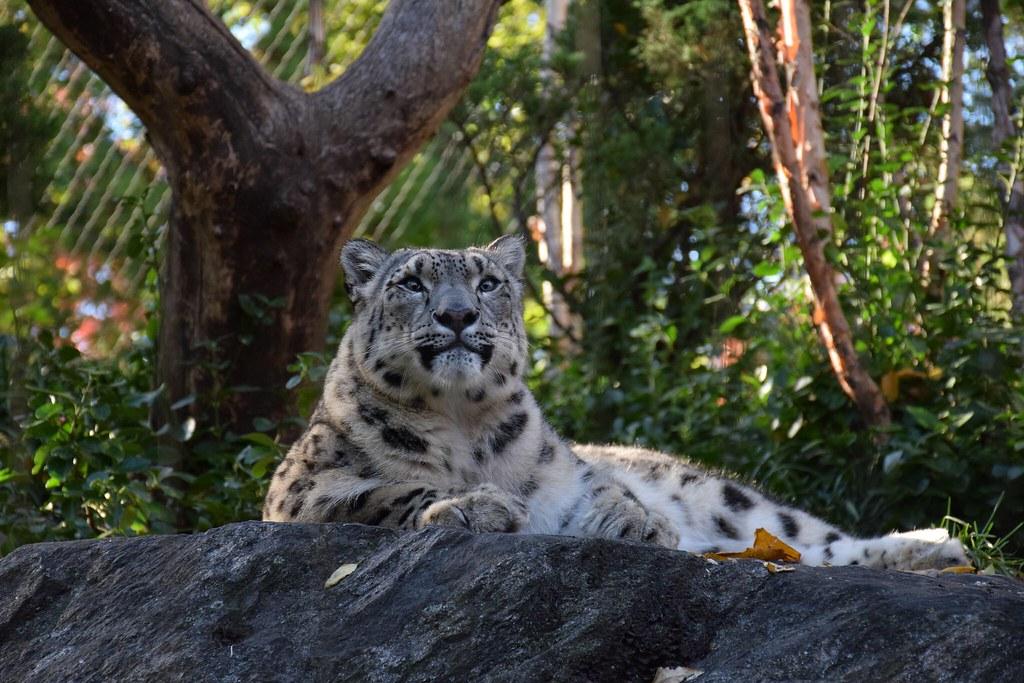 El leopardo de las nieves. Nos llevamos un pequeño peluche de este majestuoso animal, aunque Eva dice que es un gatito.