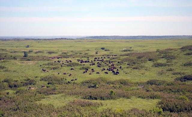 Eastern Tallgrass Prairie