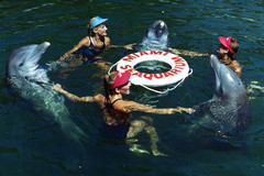 Animal trainers performing with dolphins at the Miami Seaquarium attraction