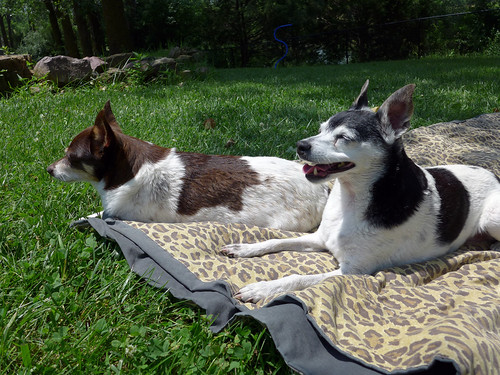 2015-07-05 - Mags & Rennie, Drying Off - 0009 [flickr]