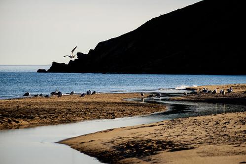 ocean morning seagulls canada beach water birds flying sand stream novascotia gulls flight capebreton dunvegan cans2s macleodsbeach fujixe2