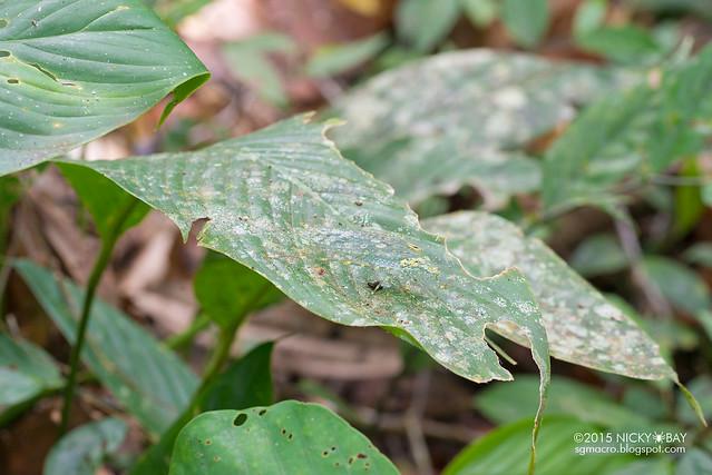 Katydid (Tettigoniidae) - DSC_5373