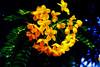yellow flower unknown