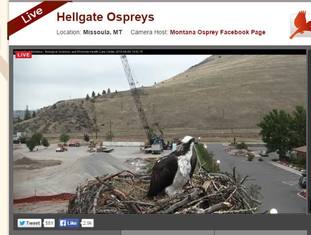 missoula osprey cam