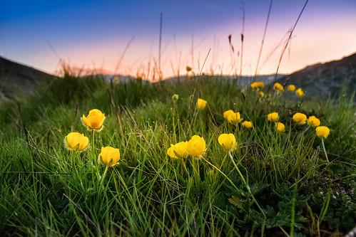 flowers sunset mountain flower green nature grass landscape nationalpark sundown dusk macedonia wildflowers mountainside greenfield clearsky bistra mavrovo nationalparkmavrovo mountbistra