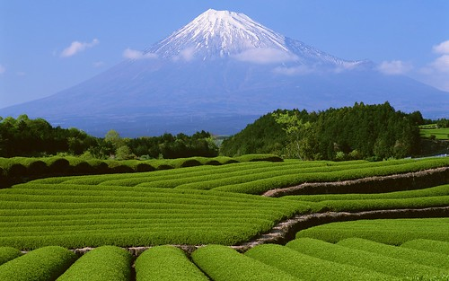 fuji-mountain-in-summer-japan