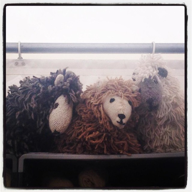 woolly #fibreeast #sheep #knitting