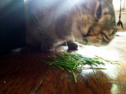 Z Enjoying Her Oat Grass