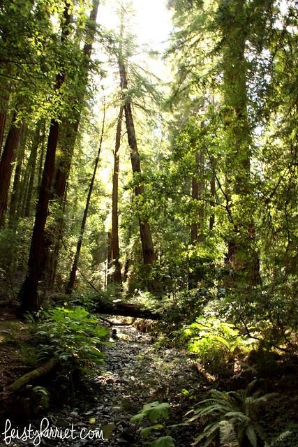 Muir Woods National Monument_feistyharriet_July 2015 (14)