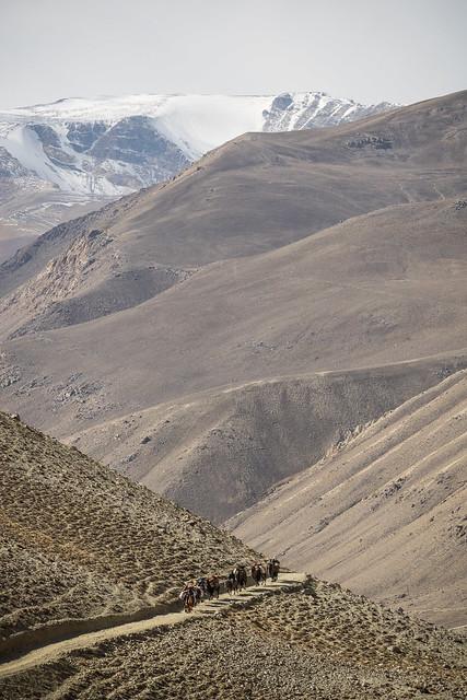 Camel Caravan in front of Hindu Kush