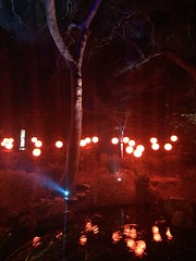 Enchanted: Forest of Light