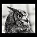 Owl (0v0) by NIKKI O BRIEN