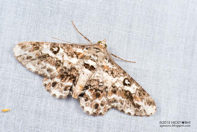 Moth - DSC_4679