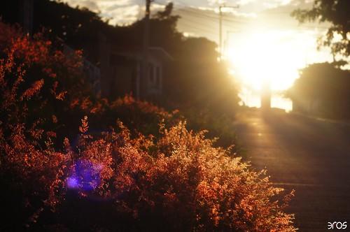 sunset sun landscape airelibre sonya55