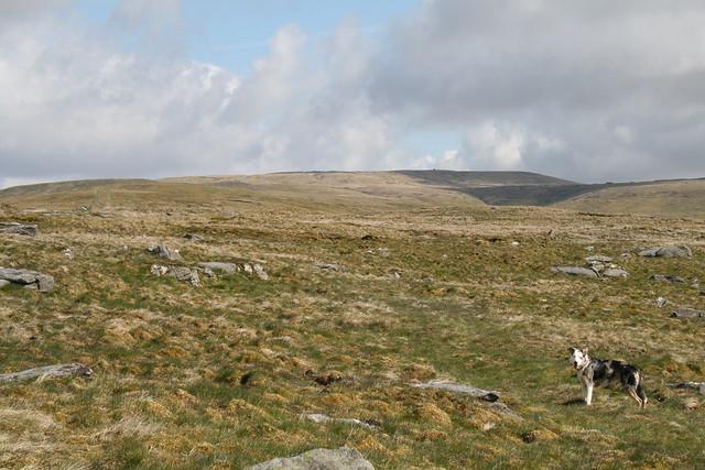 En route up Great Shunner Fell