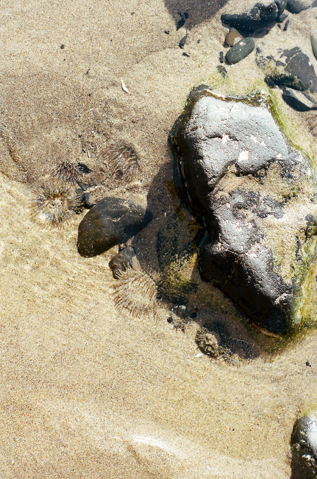 love youa blog // cannon beach, oregon