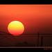 Rey sol by vimavaco