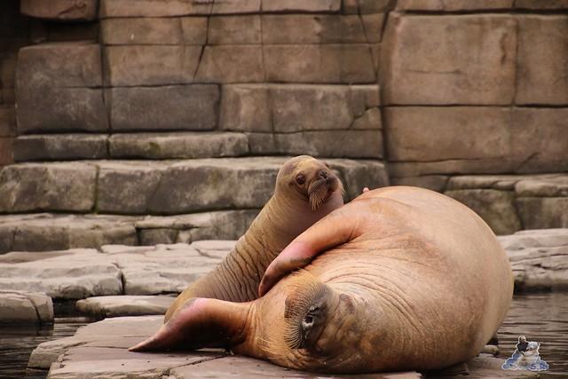 Tierpark Hagenbeck 25.07.2015 0109