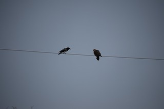 Merlin & Magpie 2