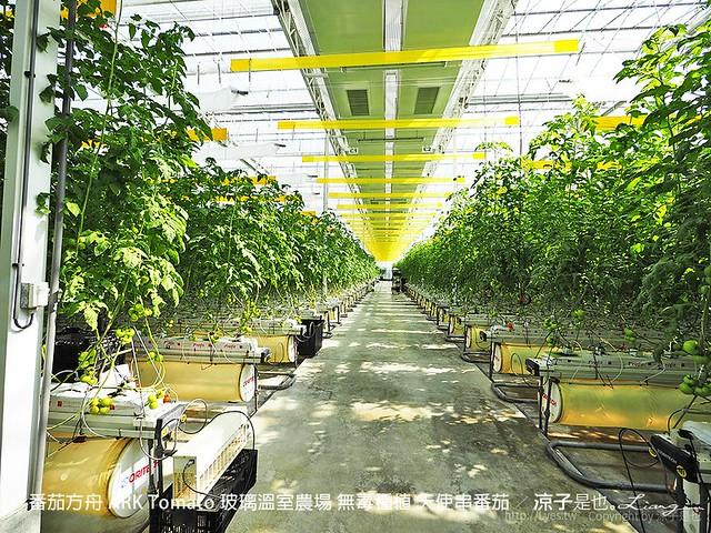 番茄方舟 ARK Tomato 玻璃溫室農場 無毒種植 天使串番茄 24