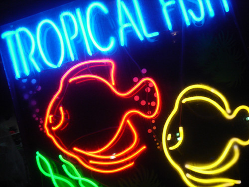 Tropical fish neon toronto on explore tadson 39 s photos for Fish neon sign