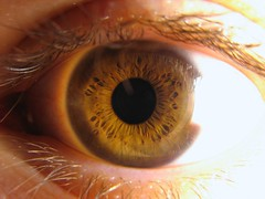 iris, vision care, brown, yellow, macro photography, eyelash, close-up, eye, organ,