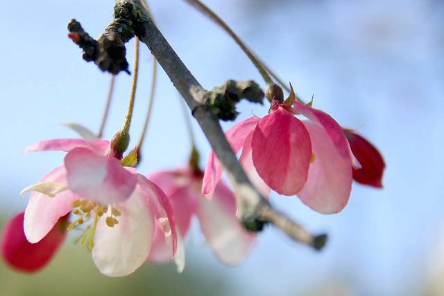 Low hangin' blossom