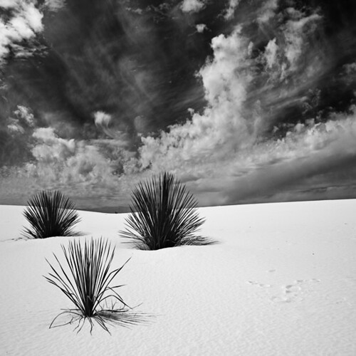 Crowd, White Sands