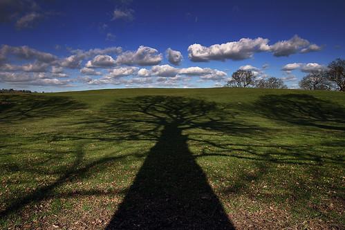 shadow sky tree landscape edgware
