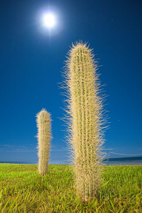 Moon & Cactus - Night Shot