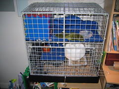 art(0.0), pet(0.0), window covering(0.0), parakeet(0.0), dog crate(1.0), room(1.0), cage(1.0), animal shelter(1.0),