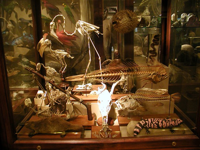 Cabinet Of Curiosities Flickr Photo Sharing